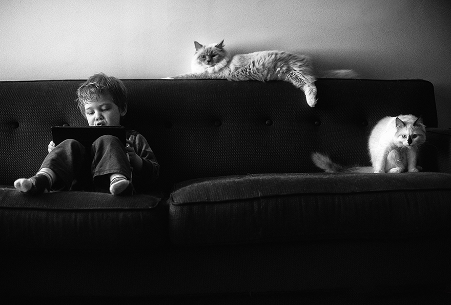 boy-cat-beth-mancuso-photography-6